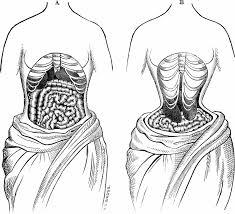 Dal web: lo spostamento degli organi dovuto al corsetto