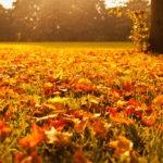 Segnalazioni d'autunno #1 – Astro Edizioni